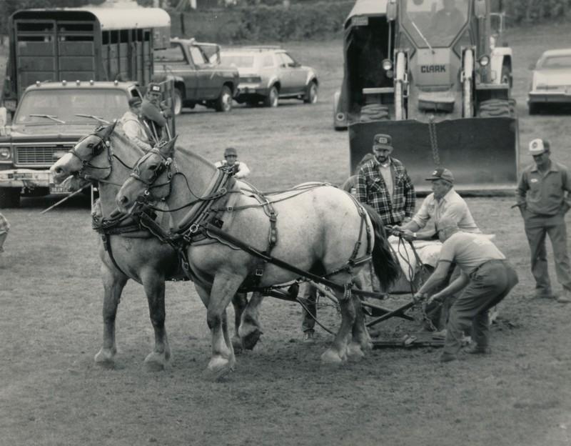 Horse Draw 2.jpg