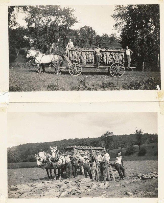 tobacco 1930.jpg