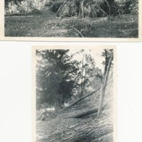 1938 Hurricane Damage in Howland Cemetery