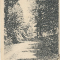 Postcard of Parson's Woods, Conway, Mass.