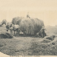Postcard of Haying