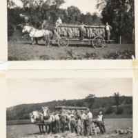 Photographs of Tobacco Wagon and Farmers on Reed Farm